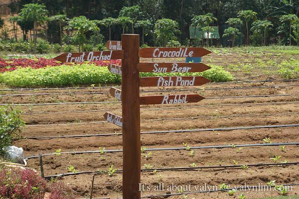 【民丹岛】半日游去生态农场(Eco Farm)看Zootopia 慢侠客 向日葵