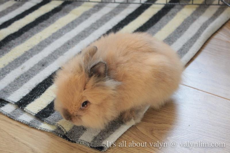 【KimchiBaby】兔女儿隆重登场!