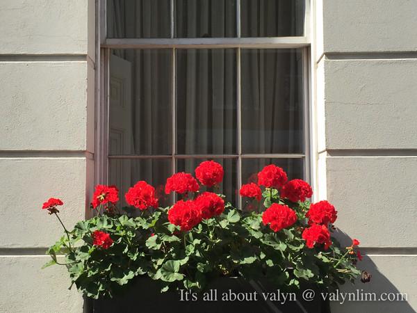 伦敦夏末8月份。随写